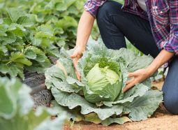 Jovens no campo: como garantir a continuidade da agricultura?