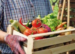 Alimentação sustentável: agricultura familiar movimenta a economia no país   e contrib...