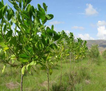 5 dicas fáceis e práticas para combater as mudanças climáticas