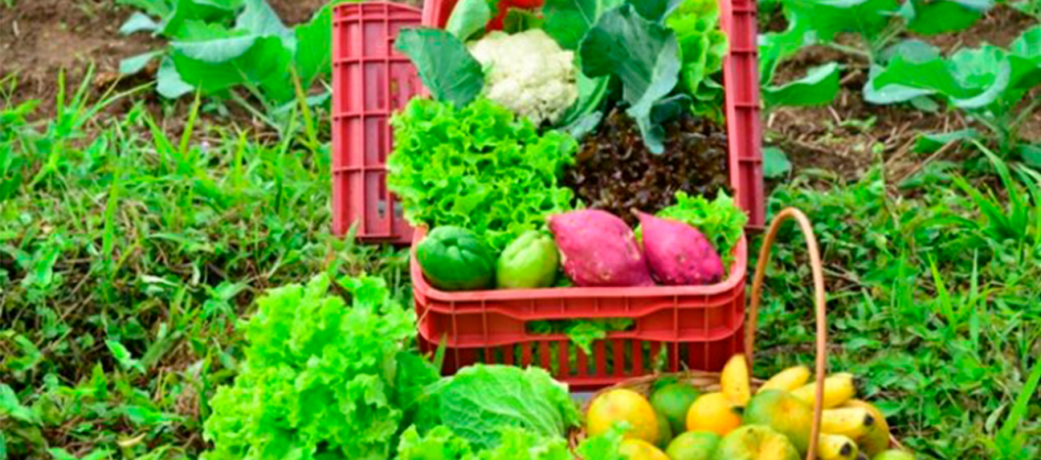 Epagri promove capacitação on-line sobre agroecologia na ...