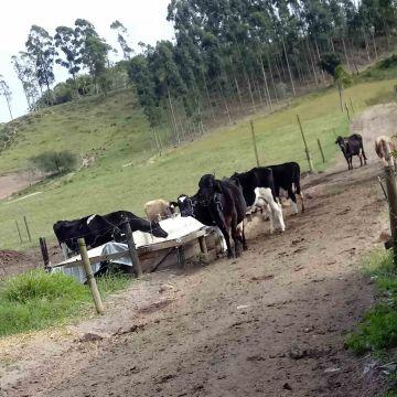Suporte técnico auxilia nas demandas da agricultura