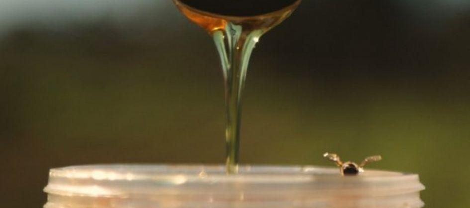 Produtor do melhor mel do mundo, Santa Catarina prevê safr...