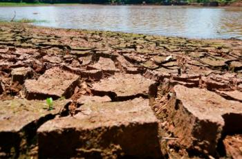 Estiagem em SC: Epagri divulga manejos recomendados para diminuir prejuízos nos cultivos